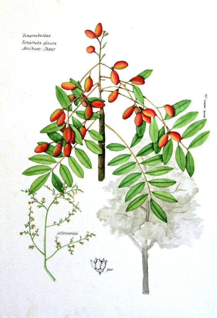 Susi Sierra