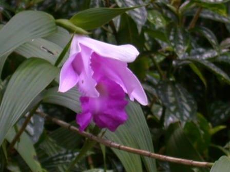 Flor-©A. L.de MacVean